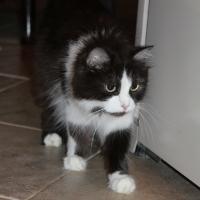 Кошка Мурыся