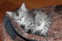 Котята, подборка